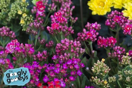 02 Flower Market