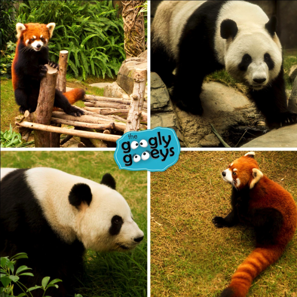 Hong Kong Pandas