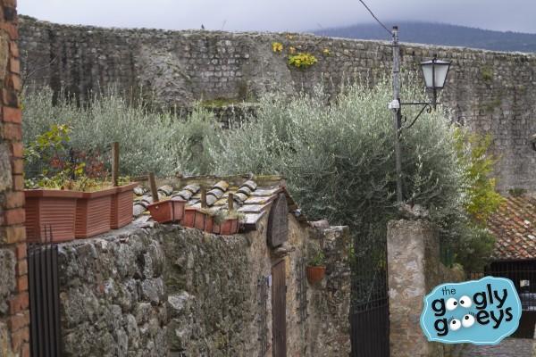 San Gimignano Tuscan Region Olive Trees