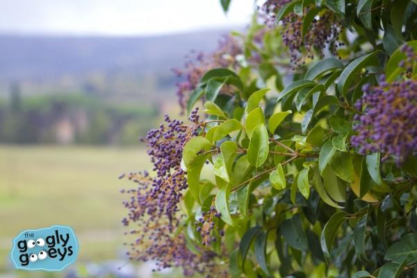Monteriggioni Plants