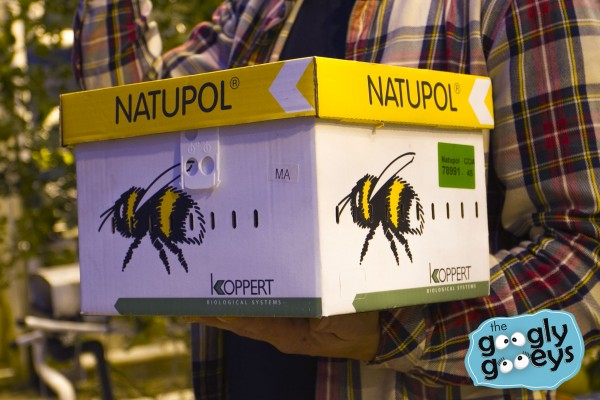Iceland imports bees