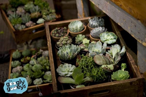 10 Cactus IMG_9623