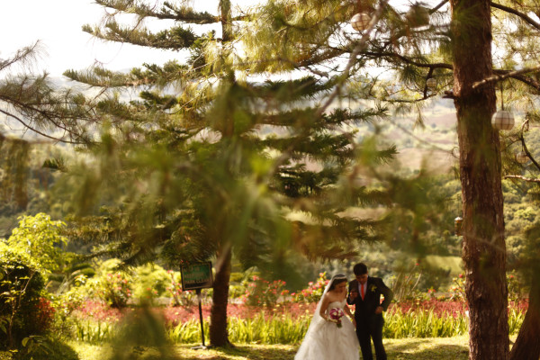 Googly Gooeys Wedding Pine Trees